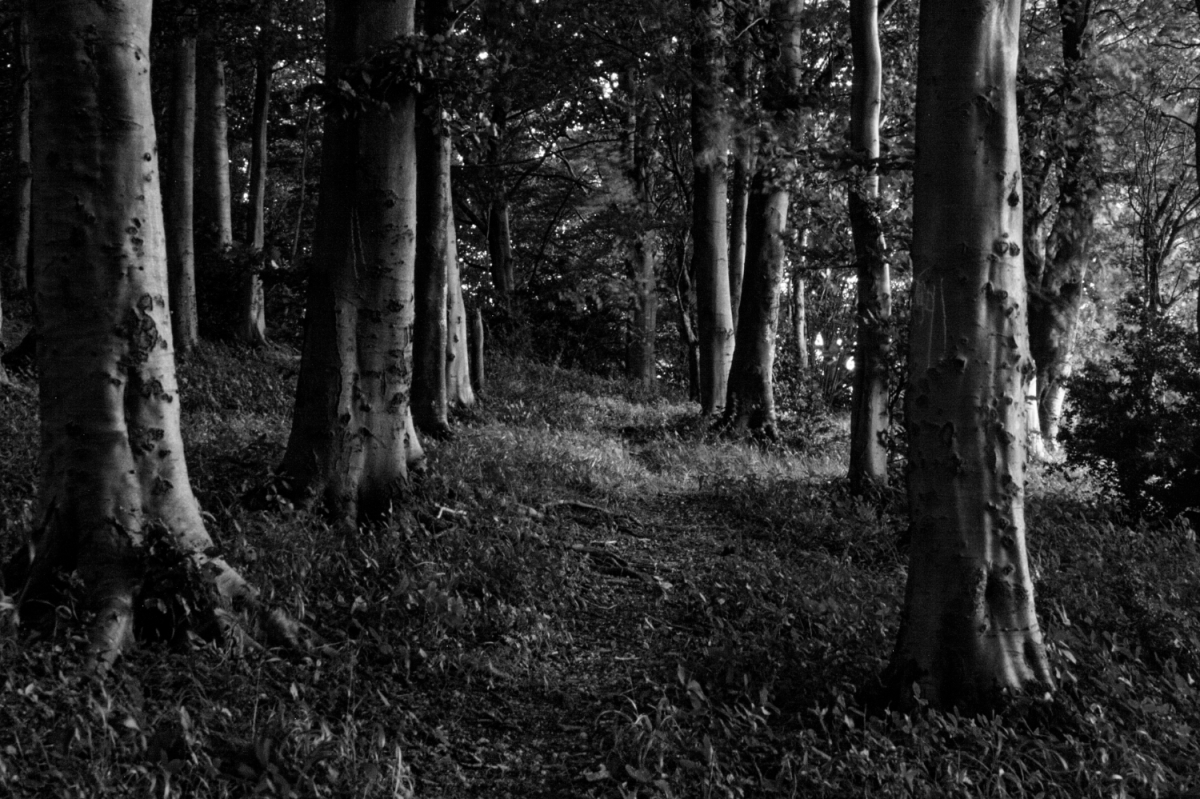 Roundway Forest