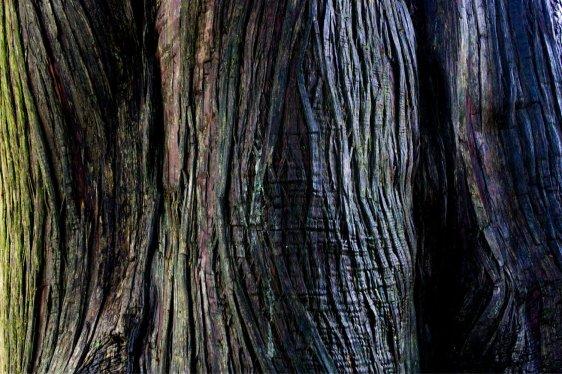 Colourful Bark